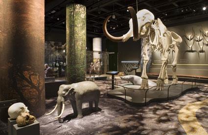 Mammuten, urelefanten och minielefanten