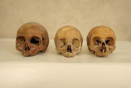 De kranier som felaktigt attribuerats till: Magnus Ladulås, Drottning Helvigs och Rikissa. Foto: Henrik Nordin, Svea television