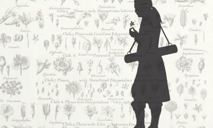 Clas Bjerkander – Linnélärjunge, präst och naturforskare