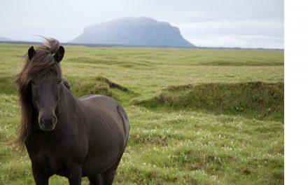 Då började hästen gå passgång