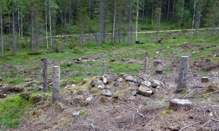 """Dalarnas fornlämningar förstörs – """"skogsbolagen måste samarbeta"""""""