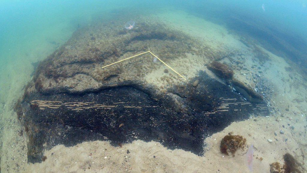 Flätade hasselkäppar som för cirka 9 000 år sedan utgjorde en stationär fiskfälla. Foto: Arne Sjöström