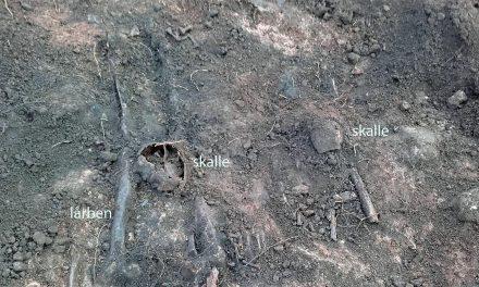 Halshuggna män hittade i Falköping