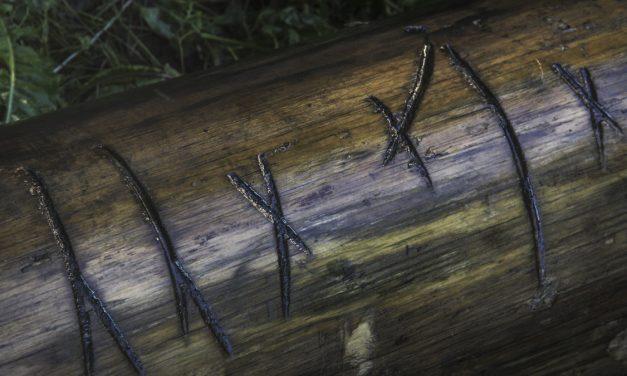 Delar av 1600-talsskepp funnet vid Skeppsholmen