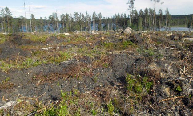 Fortsatt stora skador på fornlämningar vid skogsavverkningar