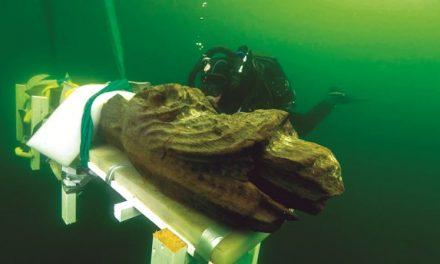 Nya dykningar vid Gribshunden