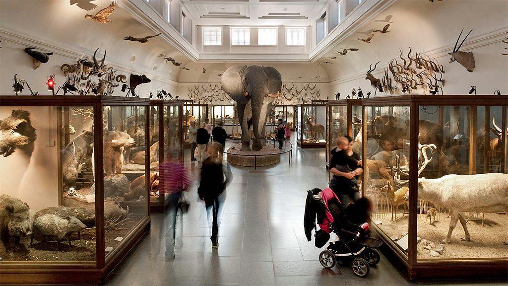 Däggdjurssalen på Göteborgs naturhistoriska museum. Foto: Västarvet