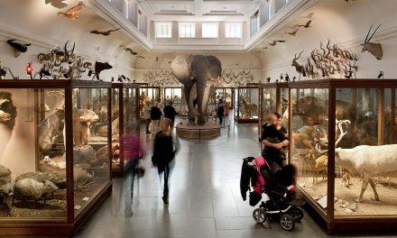 Fri entré på Göteborgs naturhistoriska museum från årsskiftet