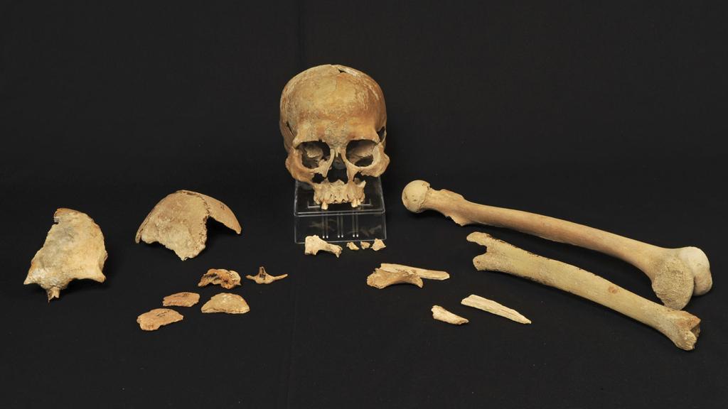 tre metoder för att datera fossil