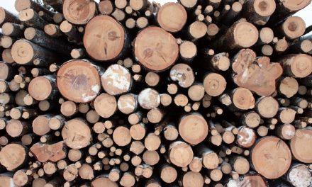 Statens avverkning riskerar skada unikt järnåldersområde