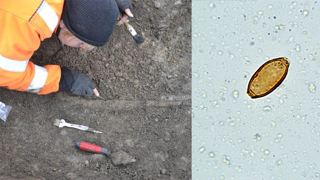 Arkeolog i Motala; ägg av piskmask. Foto: Arkeologerna