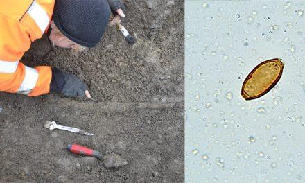 Äldsta fyndet av inälvsparasit i Sverige