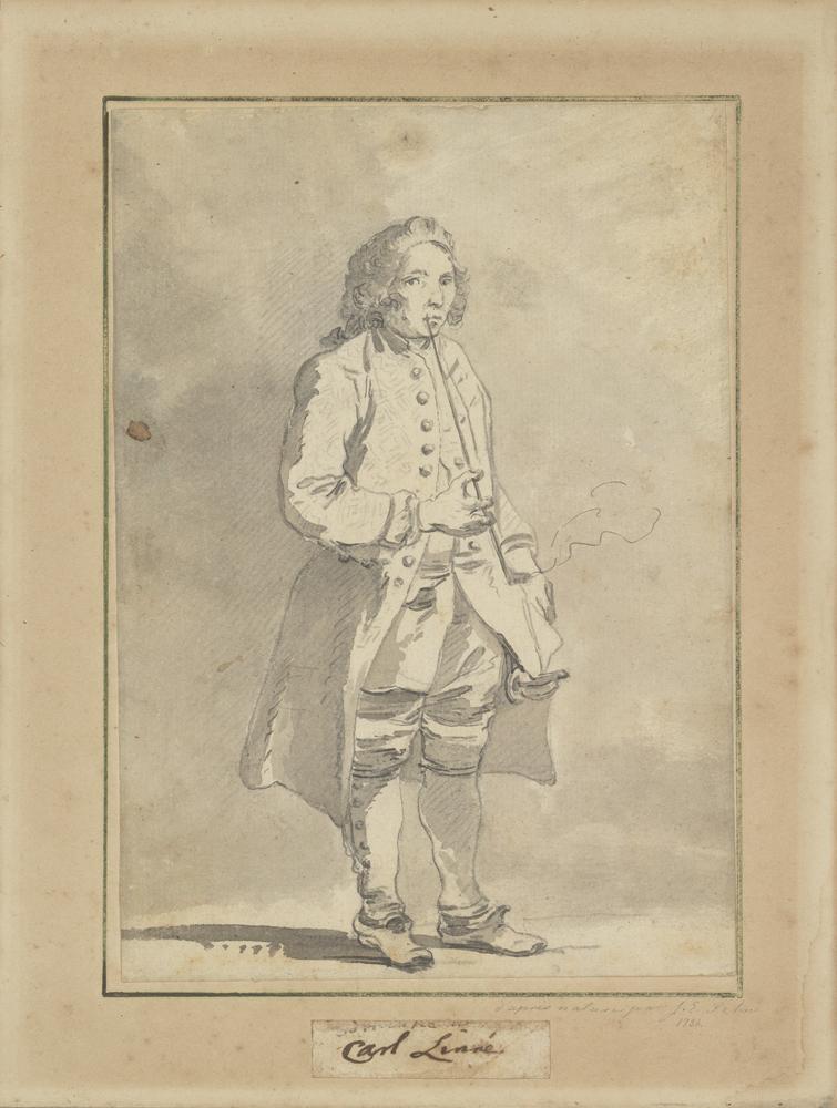 LInnéporträttet