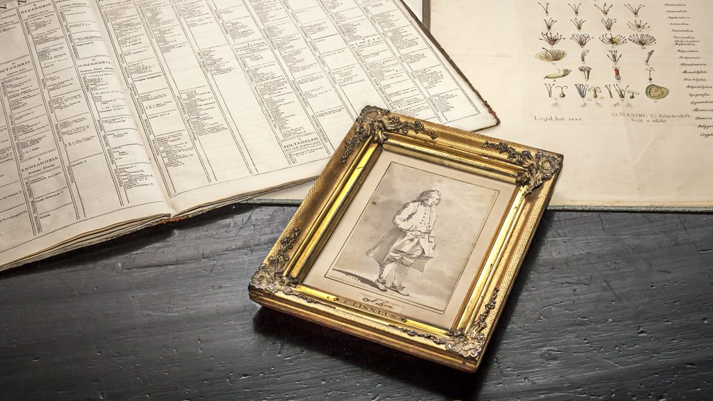 Jean Eric Rehns laverade blyertsteckning av Carl von Linné. Foto: Magnus Hjalmarsson/Uppsala universitetsbibliotek