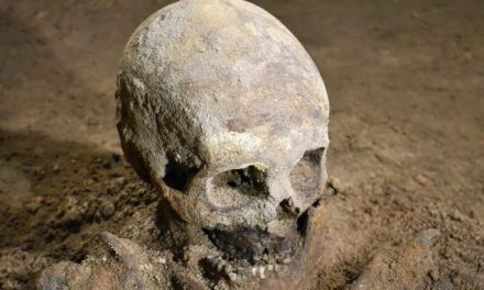 Skelett från 1600-talet hittat i källare i Kalmar