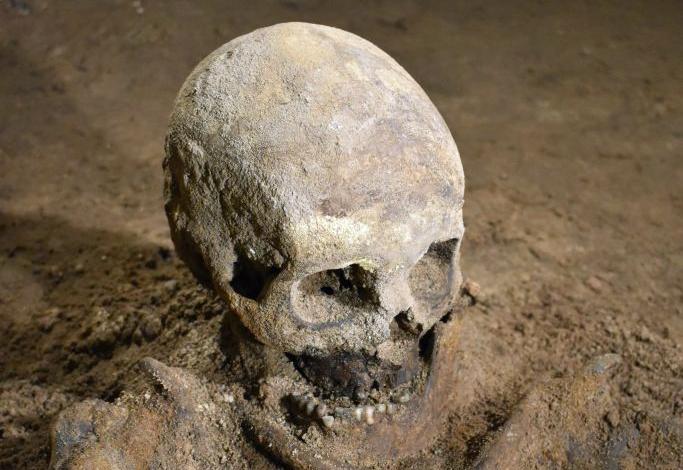 Skelettet i Appeltofftska husets källare. Foto: Arkeologerna