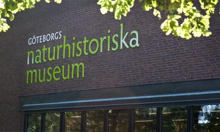 Mänskliga kvarlevor flyttades från Göteborgs naturhistoriska museum