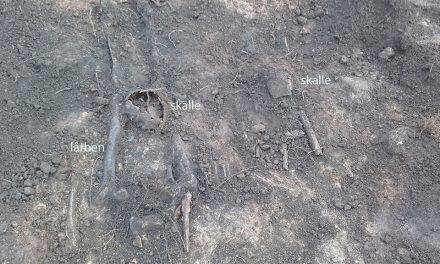Fynd från vikingatida avrättning i Falköping
