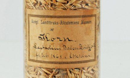 Väckelsepredikant kan ha spritt kornet i Norrbotten