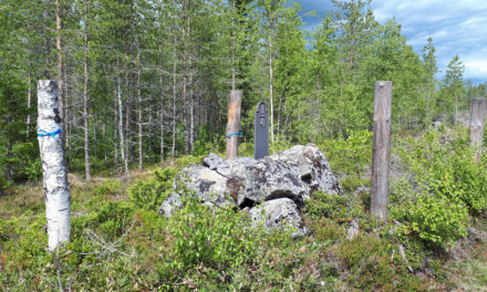 Fler fornlämningar klarar sig i skogen