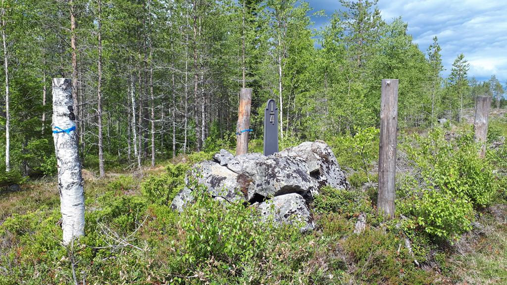 Kulturstubbar som markerar en milsten. Foto: AnnKristin Unander/Skogsstyrelsen