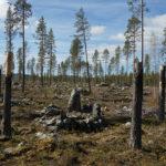Så kan skador på fornlämningar undvikas vid skogsbruk