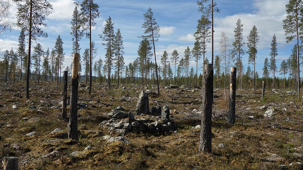 Gränsmärke i Norrbottens län omgärdat av kulturstubbar. Foto: Leif Gren (CC BY)