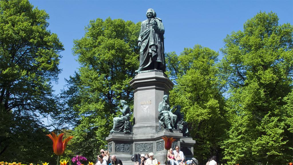Fritjof Kjellbergs bronsstaty över Carl von Linné i Humlegården i Stockholm. Foto: I99pema (Wikimedia Commons CC BY-SA 3.0)
