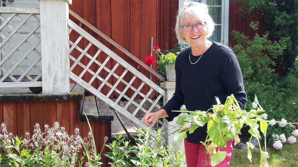 Britta Grenås, en av de frivilliga som sköter trädgården vid Stora Hyttnäs i Dalarna. Foto: Tina Westerlund/Göteborgs universitet