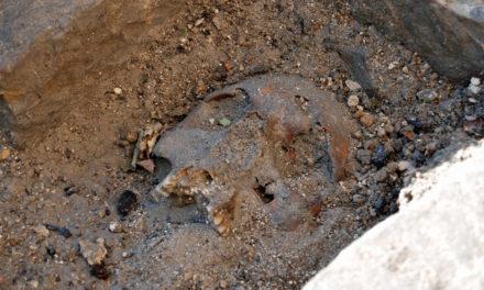 Medeltida grav funnen vid Lunds domkyrka