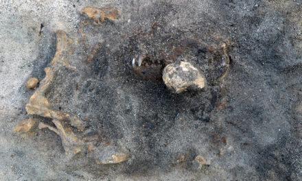 I Ljungaviken ligger en hund begraven – hittades efter 8 200 år