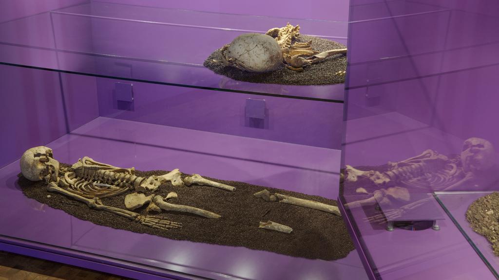 Ledtrådar – stolphål, DNA och andra spår från forntiden