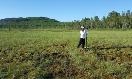 Ny forskning undersöker medeltida pollen i myrar