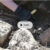 Kristna vikingatida gravar undersöks i Sigtuna